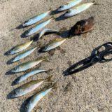 【アジング好きに朗報】佐賀の馬渡島でアジを釣ろう♪part2        ボウズ回避の釣れない時の保険★