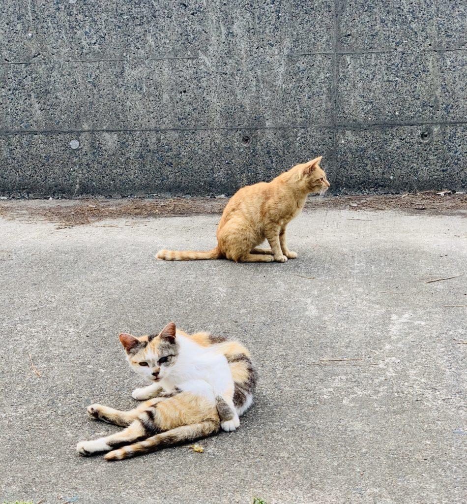 港の猫たち