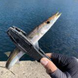 【魚影が濃くヒラマサ・イカ釣りで人気の島!】佐賀の呼子沖の加唐島でアジング釣行