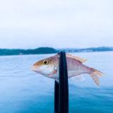 《平戸アジング》釣り場探しの釣行!いい釣り場はあるか?