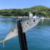 《島釣り!デイアジング!》馬渡島釣行いってきましたー。