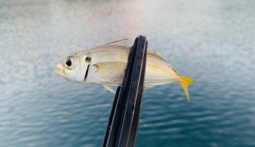 【エギングの聖地!?】長崎県北にて魚影の濃い漁港でアジング挑戦!