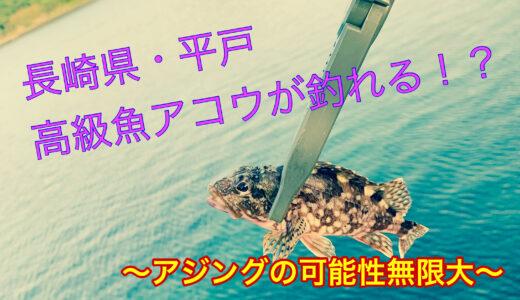 【長崎県・平戸釣り】堤防アジングなのに…あの高級魚アコウが釣れる!?